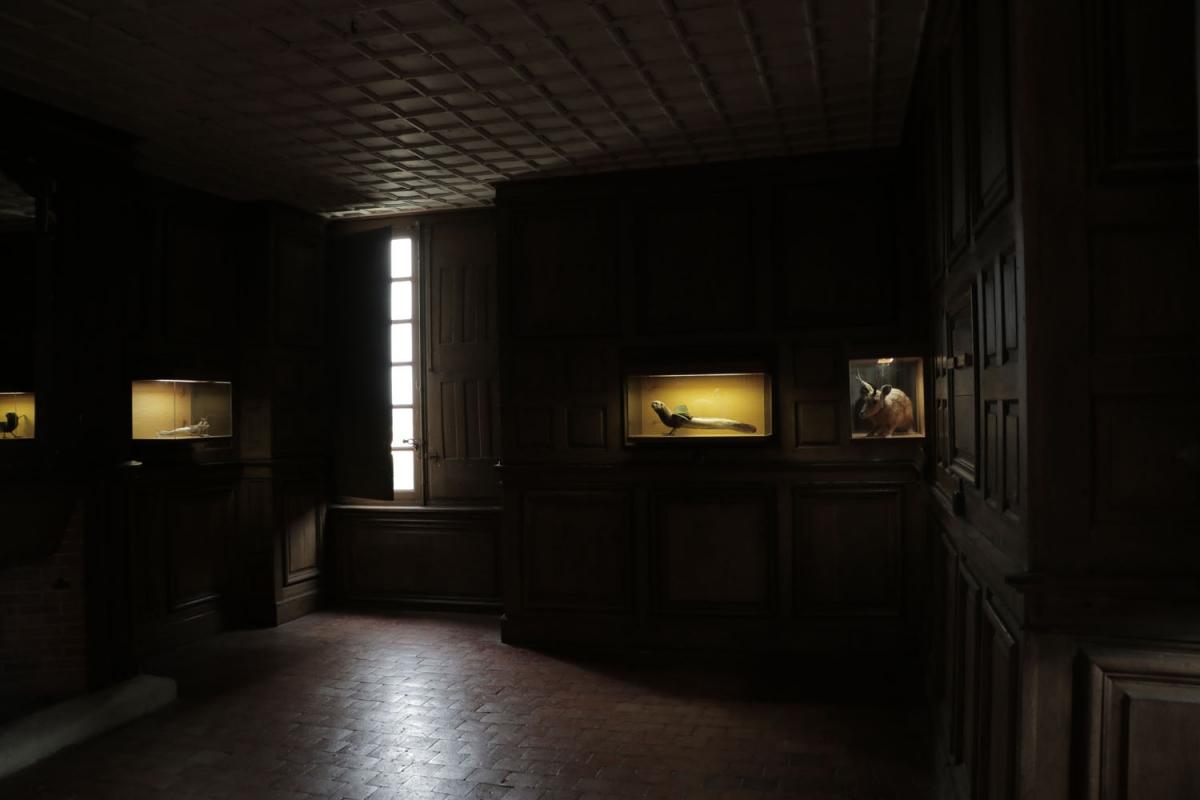 le Cabinet des Monstres - Thomas Grünfeld